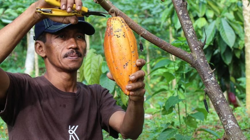 KRAKAKOA – organická bean-to-bar čokoláda z Bali